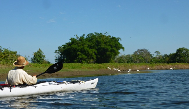 Man in white kayak going up a river lined with trees and birds