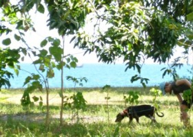 beach-property-puerto-amuelles-COro-L7-12a